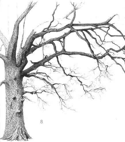 Love pen and ink drawings of trees, this website teaches you how....if you have the talent!