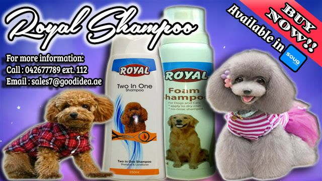 Royal Shampoos are a great value for pets and their owners. • Two in One : Shampoo and conditioner • Foam Shampoo - No rinse shampoo ( can use for Cats ) Avail Now for affordable prices. For more information: Call:042677789 loc 112 Email:sales7@goodidea.ae ◘ We are open for those who have petshops,pet store and Good samaritans helping those stray with promotional offer ♥ Also Available in : SOUQ.COM