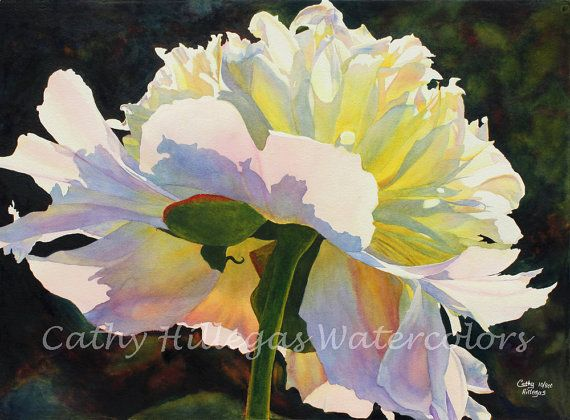 Peony watercolor painting print 16 x 22 art by Cathy Hillegas, Backlit Beauty, white peony, white, pink, yellow, blue, purple, green, red