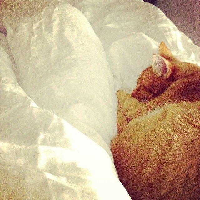 Rena,mjuka,sköna sängkläder från Zebra collection och en mysig katt! Finns inget härligare! Sov gott!