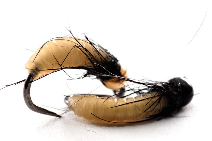 Soft bodied caddis pupae tied with catgut (Hatches Fly Tying Magazine)
