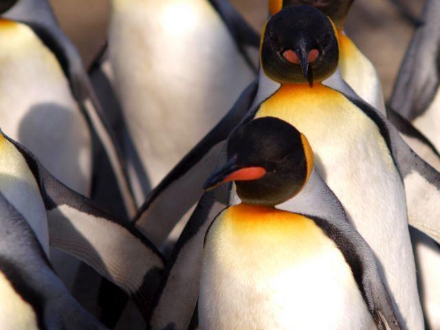Vanuit Argentinië reizen naar Antarctica