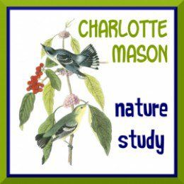 Get outdoors as often as possible -- even daily -- and enrich your homeschool experience with nature study.
