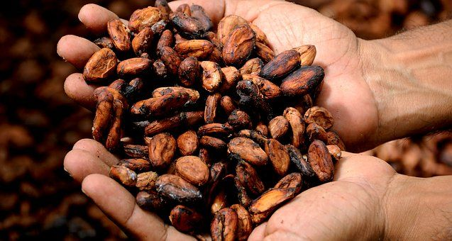 #cocoabeans#chocolate #raw #unprocessed