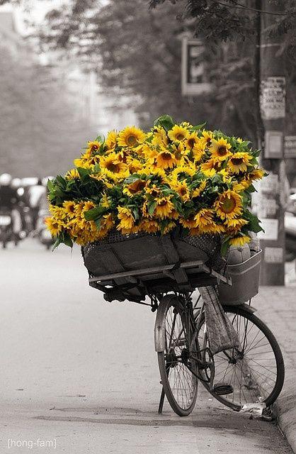 ♂ bicycle sunflowers