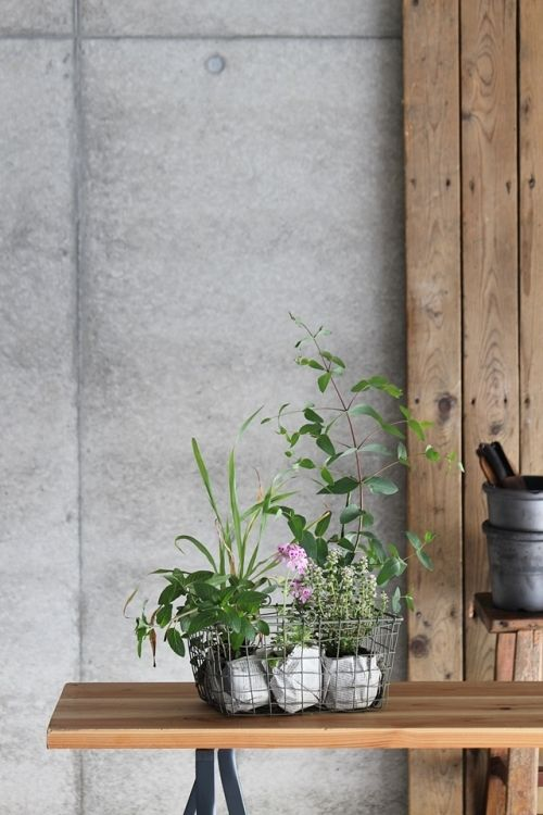 ナチュラルな虫よけ対策に おすすめハーブBEST5  http://klastyling.com/2015/05/17422/  Photostyling & Photo by Teiko Nozaki
