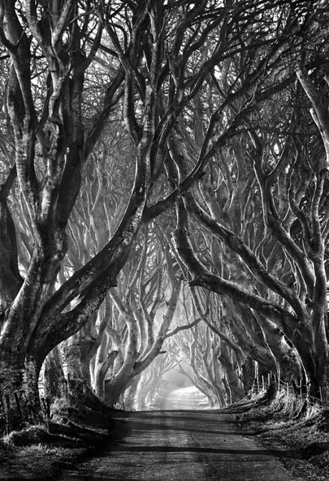black and white photo - nature - trees - beauty