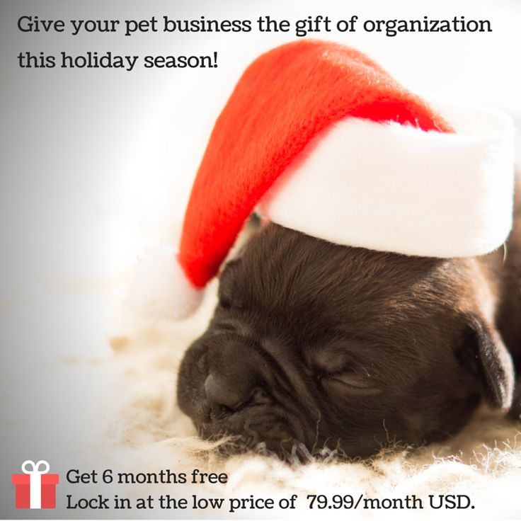 Don't forget to add your pet business to your Christmas list this year! Too busy? We get it. Get a demo and switch to ProPet in the New Year! #boardingkennel #kennelbookingsoftware