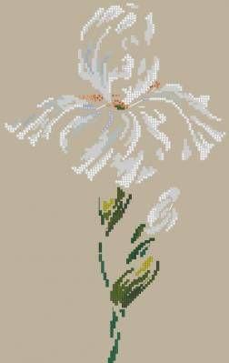 Ирис - Цветы, натюрморты с цветами - Схемы вышивки - Иголка