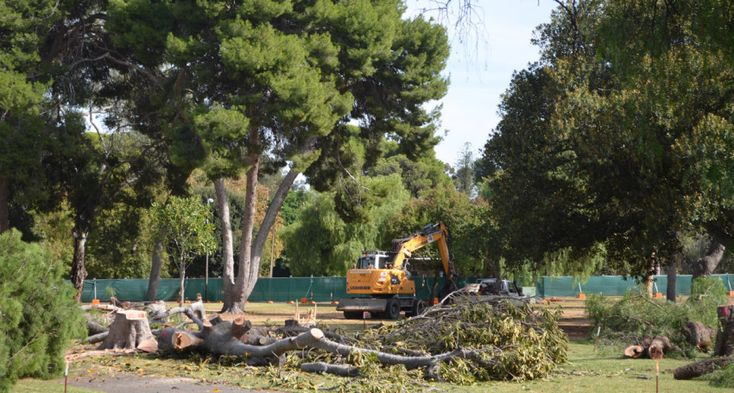 Parklands trees felled to make way for O-Bahn