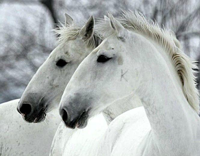 Resultado de imagem para horse