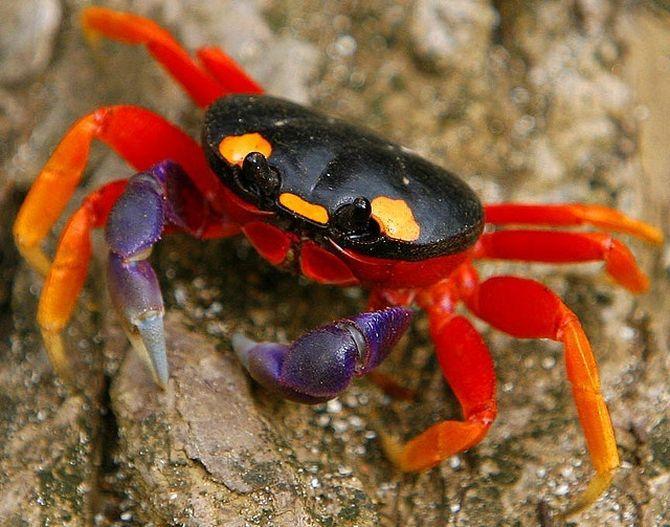 Halloween-crab_6.jpg (670×527)