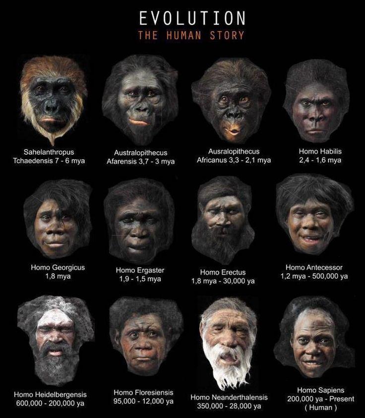 human evolution pictures - Cerca amb Google