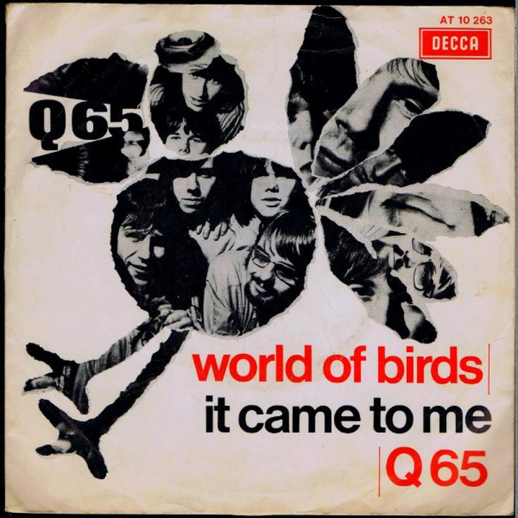 Q65 world of birds