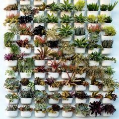 Living Wall Planters #livingwalls