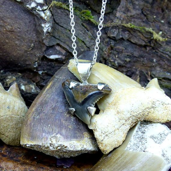Two skies scotland mini sharks tooth pendant sterling silver two skies scotland mini sharks tooth pendant sterling silver fossil necklace megalodon snaggletooth mako great white gift 7764 teething shark aloadofball Gallery