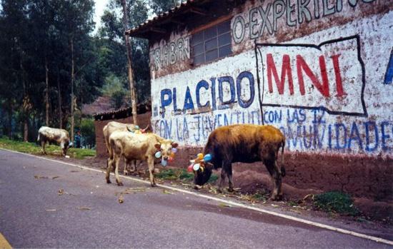 In Perù anche le mucche festeggiano #carnevale. Foto © Andrea Giavini