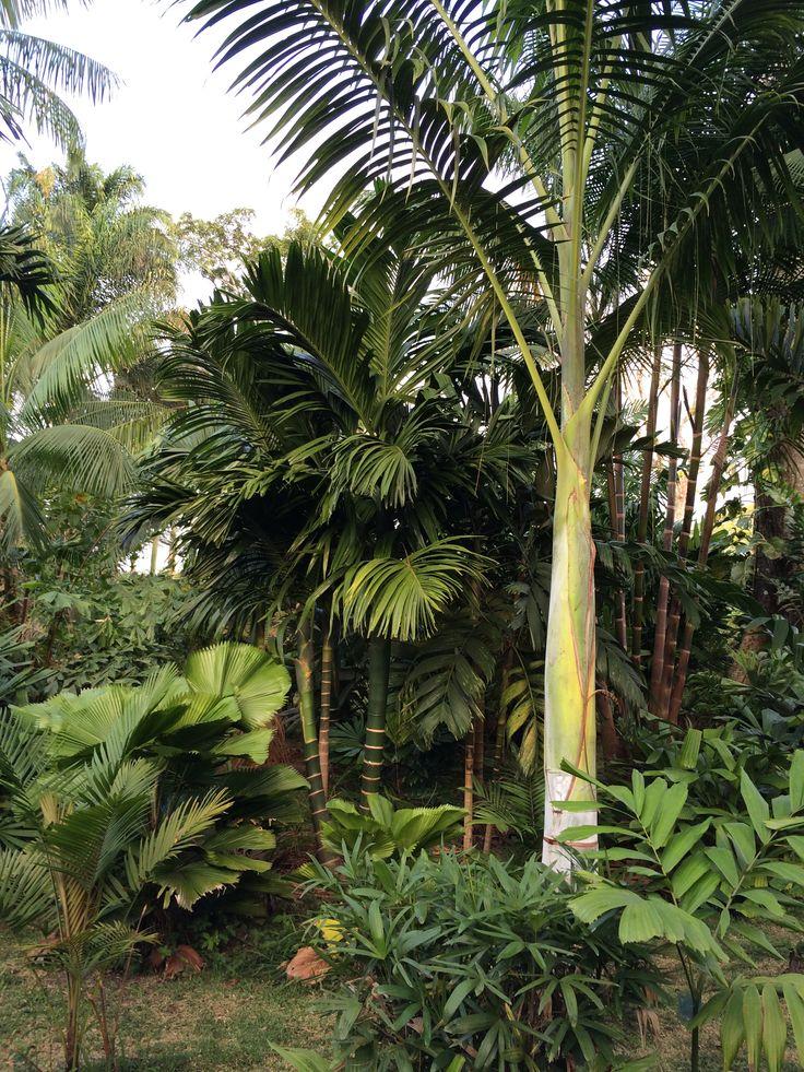 Palm garden                                                                                                                                                     More