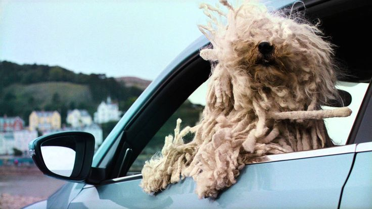 Volkswagen woofwagen dogs advert, which explores the diversity of the Volkswagen Range showing that there is one for all of us.