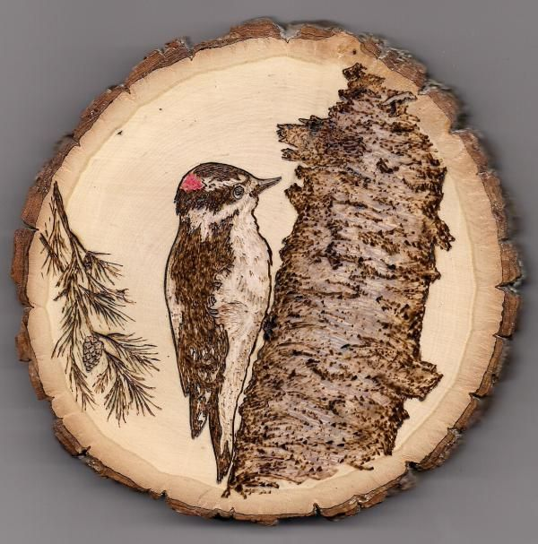 Pyrography Pictures Of Trees | Woodpecker Pyrography by Vera White - Woodpecker Fine Art Prints and ...