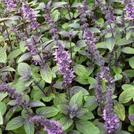 See List Herbs and Flowers Garden Edible Flowers Mix 100+ Seeds