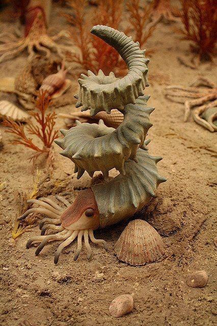 Os amonites, foram moluscos cefalópodes. Eram animais marinhos, que ocupavam o nicho ecológico das lulas de hoje. Tinham dimensões muito variáveis, desde alguns centímetros a um metro de diâmetro. O animal vivia dentro de uma concha espiralada de natureza carbonatada. Infelizmente, os amonites não existem mais na natureza, foram extintos!