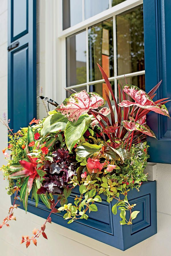 Container Gardens: Tropical Window Box