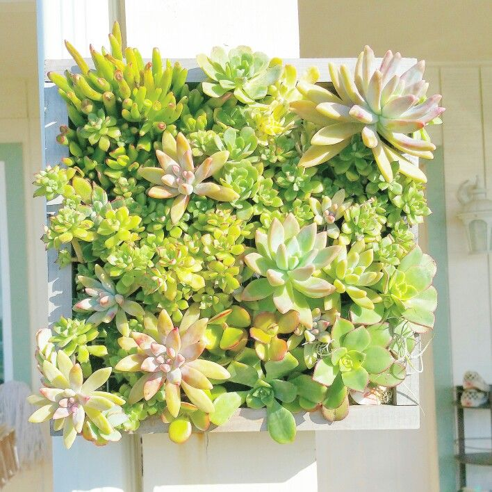 Modern Living Wall Air Plants Pictures - Wall Art Collections ...
