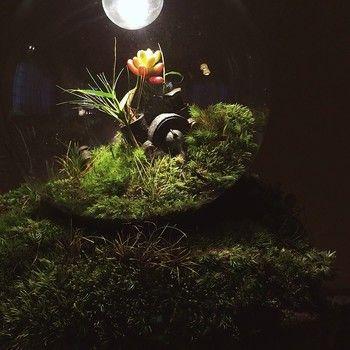 ゆっくりと、しかし着実に変化を続ける盆栽の手入れをして、この照明器具という「物」をいつまでも大切にしたいと思う気持ちは、多く物が溢れ、消費され続ける現代において、とても大切なことのように思います。