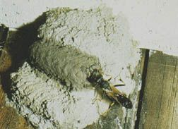 how to kill a wasps nest in an unreachable place