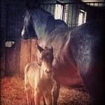 Statigram – Instagram webviewer  horse colt