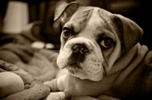 want her!