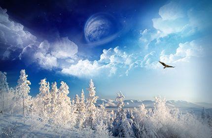 des merveilles d'hiver, les arbres enneigés, monde blanc, oiseau volant, la planète Fonds d'écran