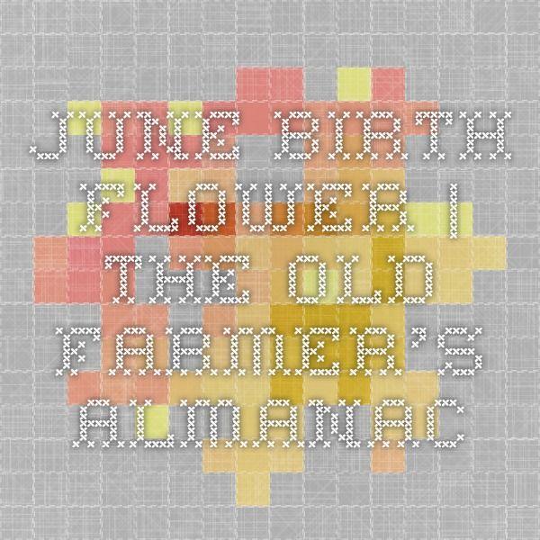 June Birth Flower | The Old Farmer's Almanac
