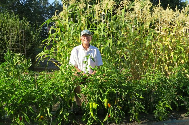 2017-9-9 - In the Garden: Doctor has just the prescription for growing peppers - Jim Gaddy may have retired as a family practice doctor three years ago, but his caregiving skills are still apparent in his vegetable garden.
