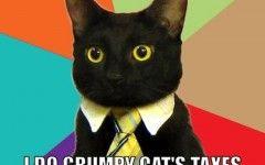 Grumpy Cat 3 Meme Generator About