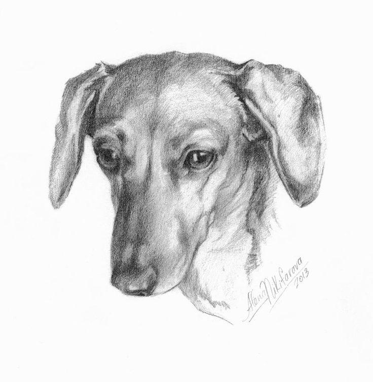 рисунки такса собака аксессуарах перчатках, шарфиках