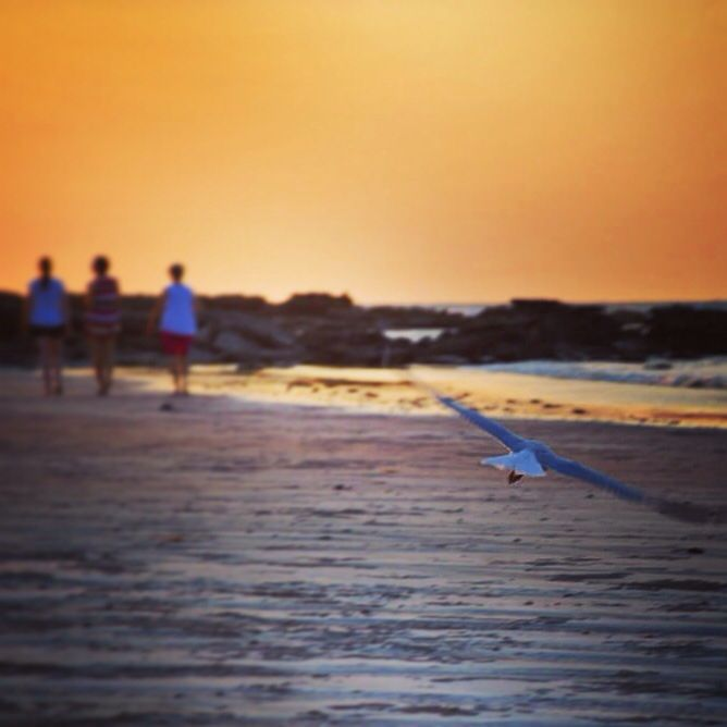 A bird's eye view of Gantheaume Point in Broome... #sunset #gantheaumepoint #broome #thekimberleyaustralia #travel #wanderlust #australia #westernaustralia #thisiswa #discoveraustralia #picoftheday #backpacking #workandtravel