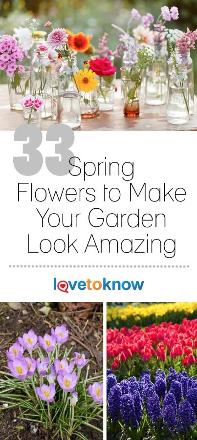 Every gardener makes a list of spring flowers during the dark days of winter, and looks forward eagerly to the first burst of spring color. Spring arrives at different times depending on where you live, but the sequence of blooms is similar in most places. With that in mind, watch for these favorites in your own garden or in the garden next door. | 33 Spring Flowers to Make Your Garden Look Amazing from #LoveToKnow