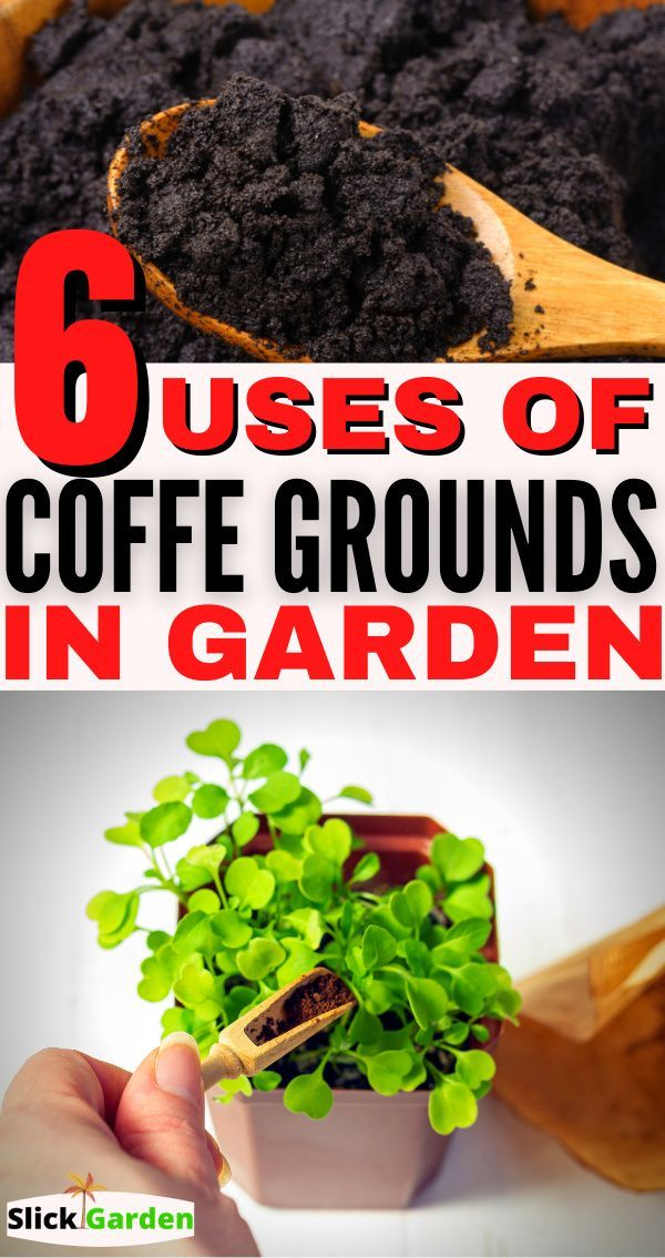 6 Uses Of Coffee Grounds In The Garden Coffee Grounds As Fertilizer How To Make Compost Healthy Plants