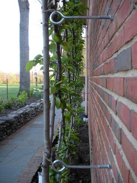 Way to hook trellis to house.