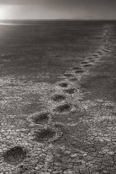 Fotógrafo registrou um caminho de pegadas de elefantes em Amboseli