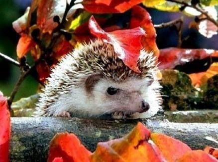 Herfst.... zòooooo schattig