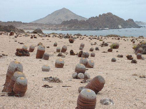 Pan de Azucar National Park, Antofagasta region, Chile