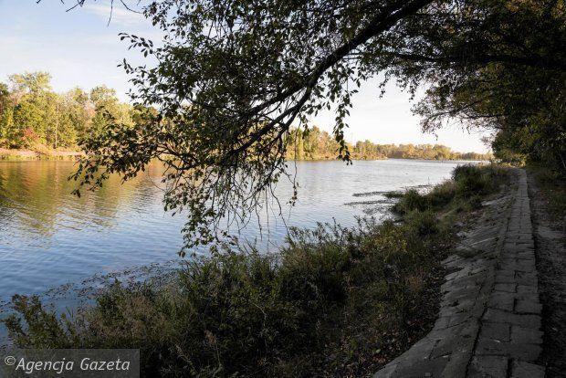 Zdjęcie numer 4 w galerii - Kanał Żerański ogołocą z drzew i krzewów.