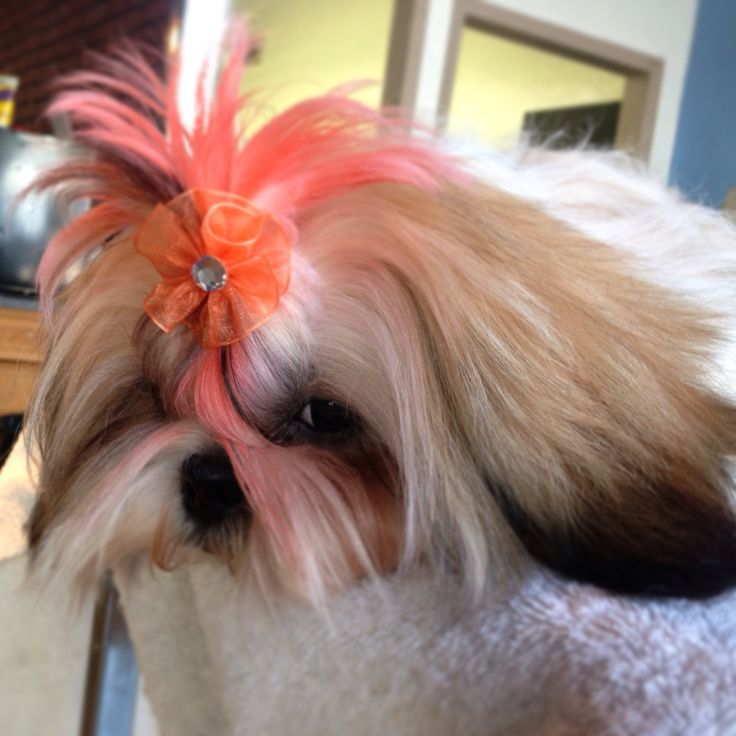 1000+ Images About Grooming Dogs On Pinterest