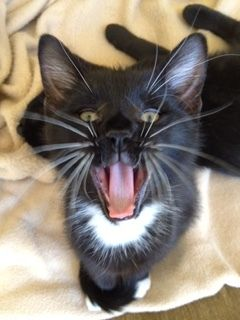 Meet Taylor! This tired kitty belongs to one of our awesome #Pod staff members. Taylor loves Pod!