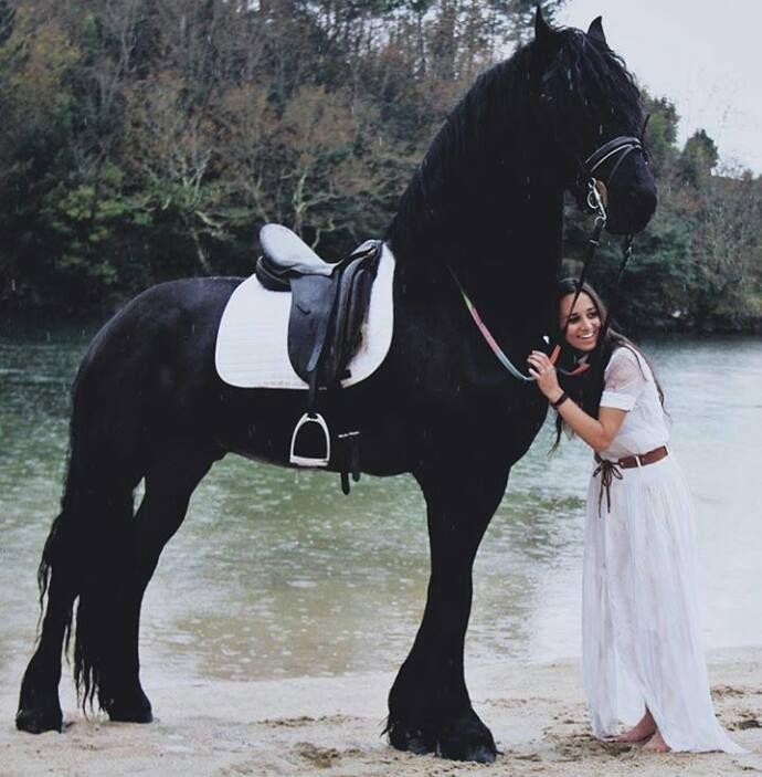 Das Ist Ein Grosser Friese Friesian Horse Beautiful Horses