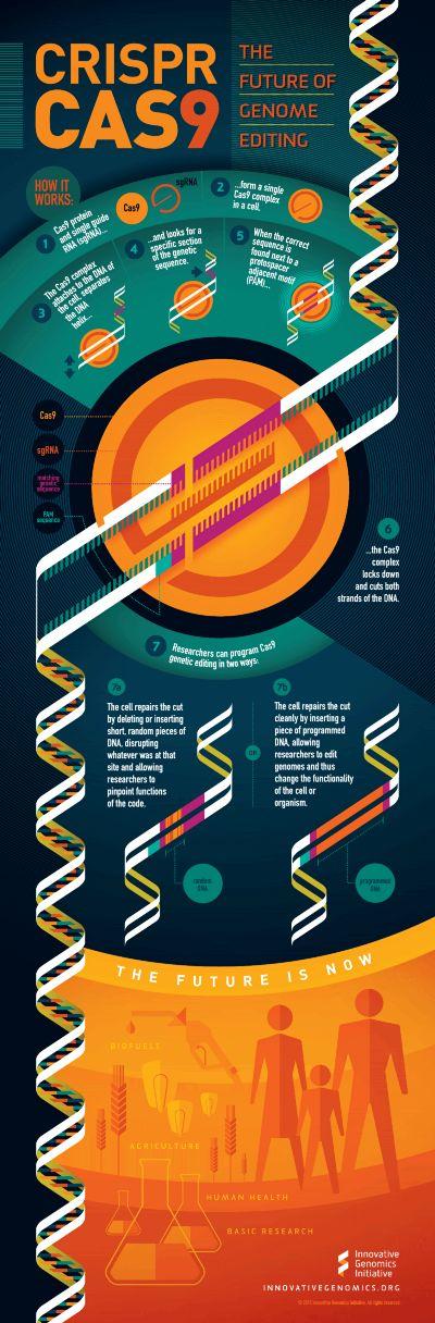 CRISPR CAS9 Album on Imgur Molecular