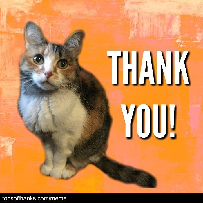 51 Nice Thank You Memes With Cats Thank You Memes Thank You Cat Meme I Love Cats